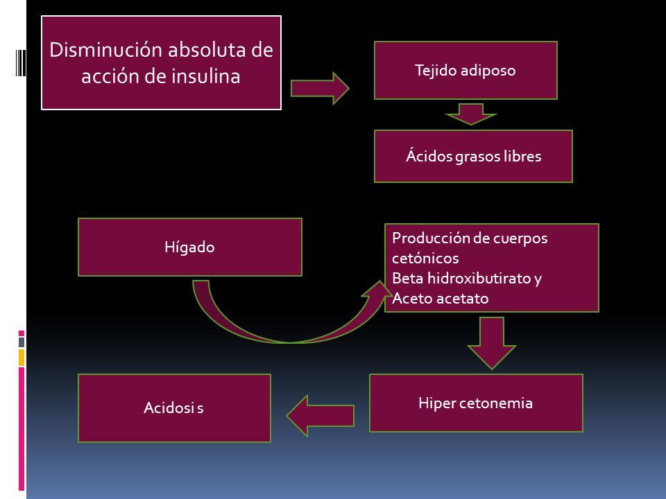 di Disminución absoluta de acción de insulina Tejido adiposo Ácidos grasos libres Hígado Producción de cuerpos cetónicos Beta hidroxibutirato y Aceto