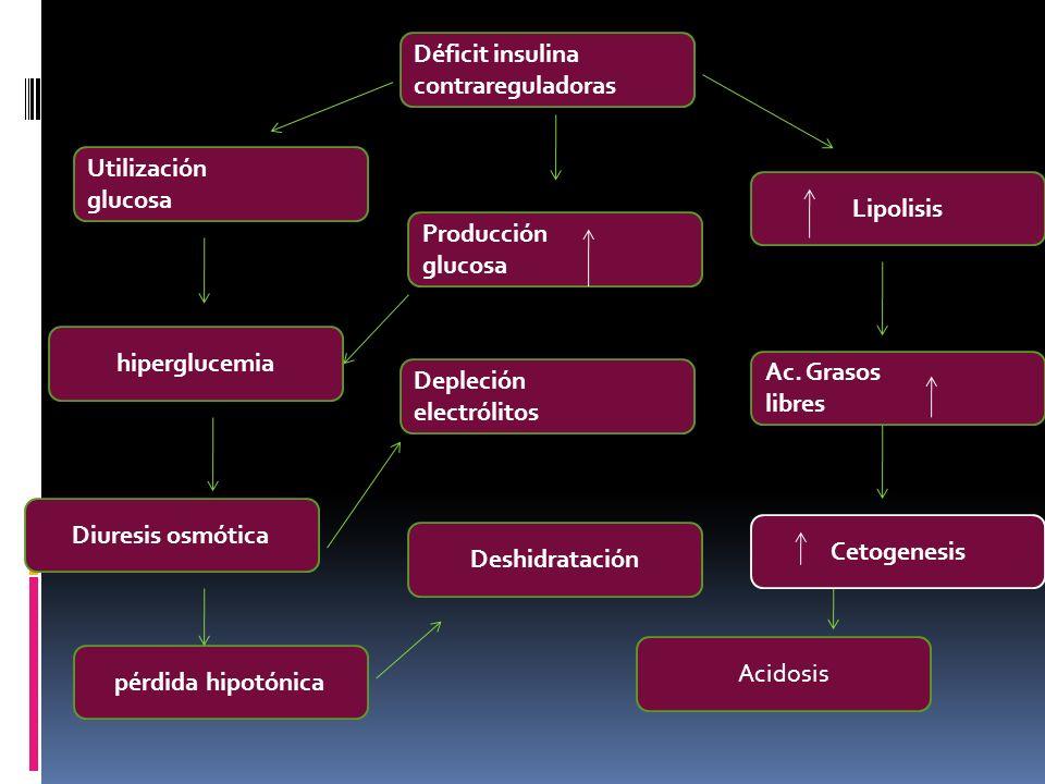 Déficit insulina contrareguladoras Diuresis osmótica hiperglucemia Utilización glucosa Deshidratación Depleción electrólitos Producción glucosa Lipoli