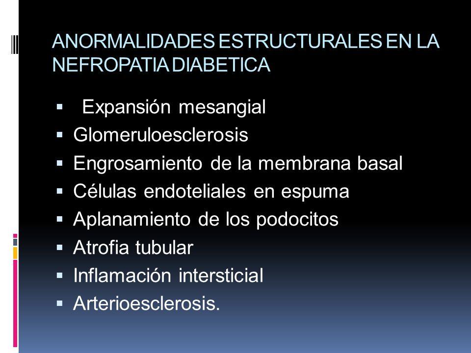 ANORMALIDADES ESTRUCTURALES EN LA NEFROPATIA DIABETICA Expansión mesangial Glomeruloesclerosis Engrosamiento de la membrana basal Células endoteliales
