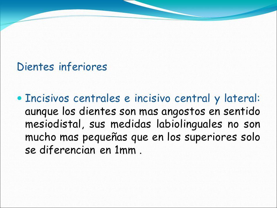 Dientes inferiores Incisivos centrales e incisivo central y lateral: aunque los dientes son mas angostos en sentido mesiodistal, sus medidas labioling