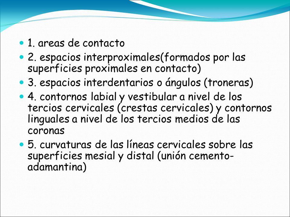 1. areas de contacto 2. espacios interproximales(formados por las superficies proximales en contacto) 3. espacios interdentarios o ángulos (troneras)