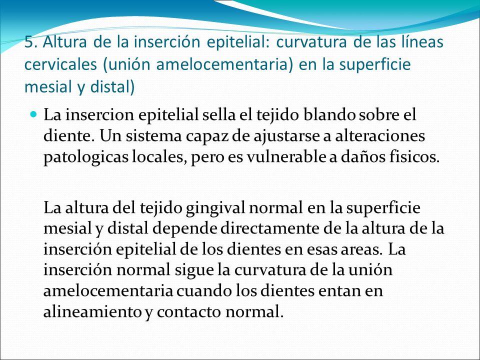 5. Altura de la inserción epitelial: curvatura de las líneas cervicales (unión amelocementaria) en la superficie mesial y distal) La insercion epiteli