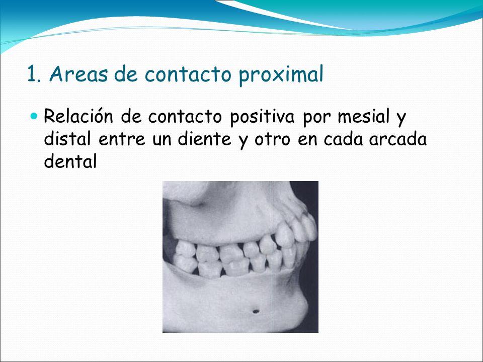 1. Areas de contacto proximal Relación de contacto positiva por mesial y distal entre un diente y otro en cada arcada dental