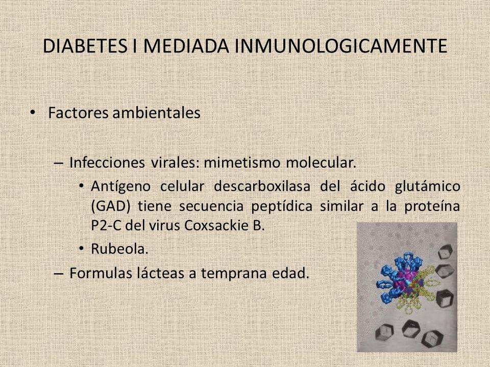 DIABETES I MEDIADA INMUNOLOGICAMENTE Factores ambientales – Infecciones virales: mimetismo molecular. Antígeno celular descarboxilasa del ácido glutám