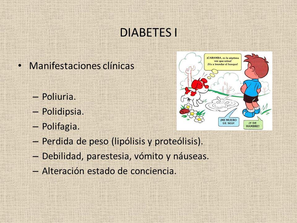 DIABETES I Manifestaciones clínicas – Poliuria. – Polidipsia. – Polifagia. – Perdida de peso (lipólisis y proteólisis). – Debilidad, parestesia, vómit