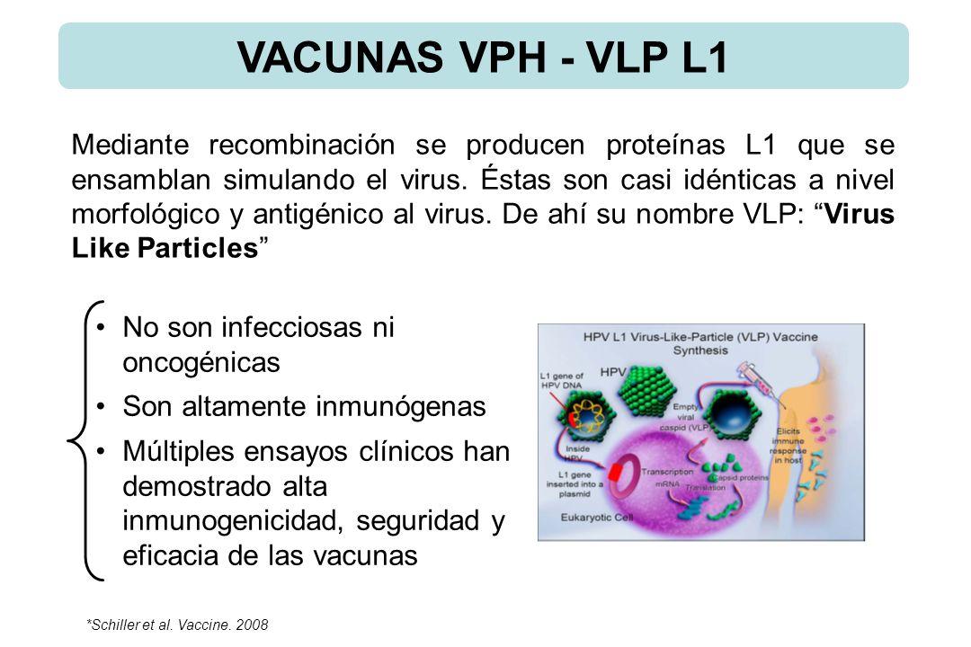 No son infecciosas ni oncogénicas Son altamente inmunógenas Múltiples ensayos clínicos han demostrado alta inmunogenicidad, seguridad y eficacia de las vacunas Mediante recombinación se producen proteínas L1 que se ensamblan simulando el virus.