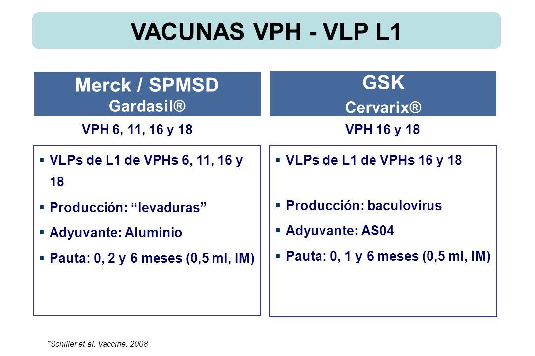 VLPs de L1 de VPHs 6, 11, 16 y 18 Producción: levaduras Adyuvante: Aluminio Pauta: 0, 2 y 6 meses (0,5 ml, IM) VLPs de L1 de VPHs 16 y 18 Producción: baculovirus Adyuvante: AS04 Pauta: 0, 1 y 6 meses (0,5 ml, IM) Merck / SPMSD Gardasil® GSK Cervarix® VPH 6, 11, 16 y 18VPH 16 y 18 VACUNAS VPH - VLP L1 *Schiller et al.