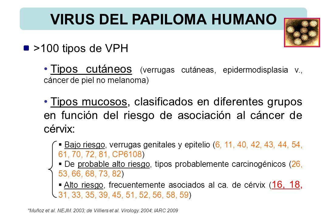 VIRUS DEL PAPILOMA HUMANO >100 tipos de VPH Tipos cutáneos (verrugas cutáneas, epidermodisplasia v., cáncer de piel no melanoma) Tipos mucosos, clasif