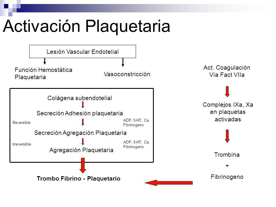 Activación Plaquetaria Lesión Vascular Endotelial Función Hemostática Plaquetaria Vasoconstricción Colágena subendotelial Secreción Adhesión plaquetar