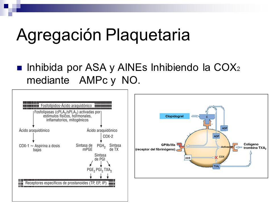 Inhibida por ASA y AINEs Inhibiendo la COX 2 mediante AMPc y NO.