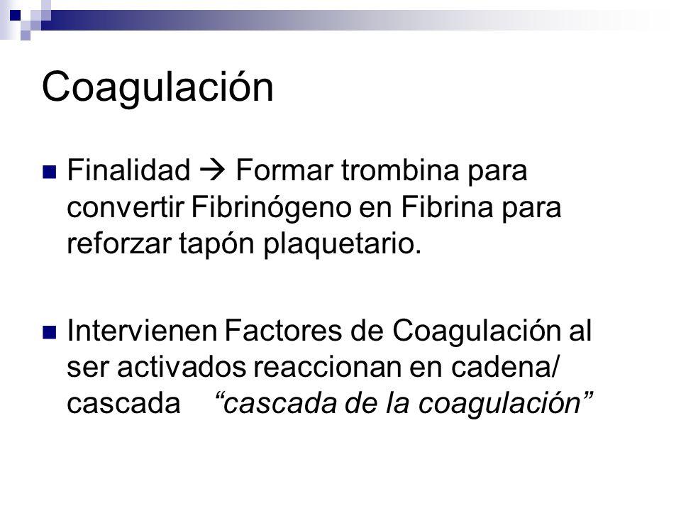 Coagulación Finalidad Formar trombina para convertir Fibrinógeno en Fibrina para reforzar tapón plaquetario. Intervienen Factores de Coagulación al se