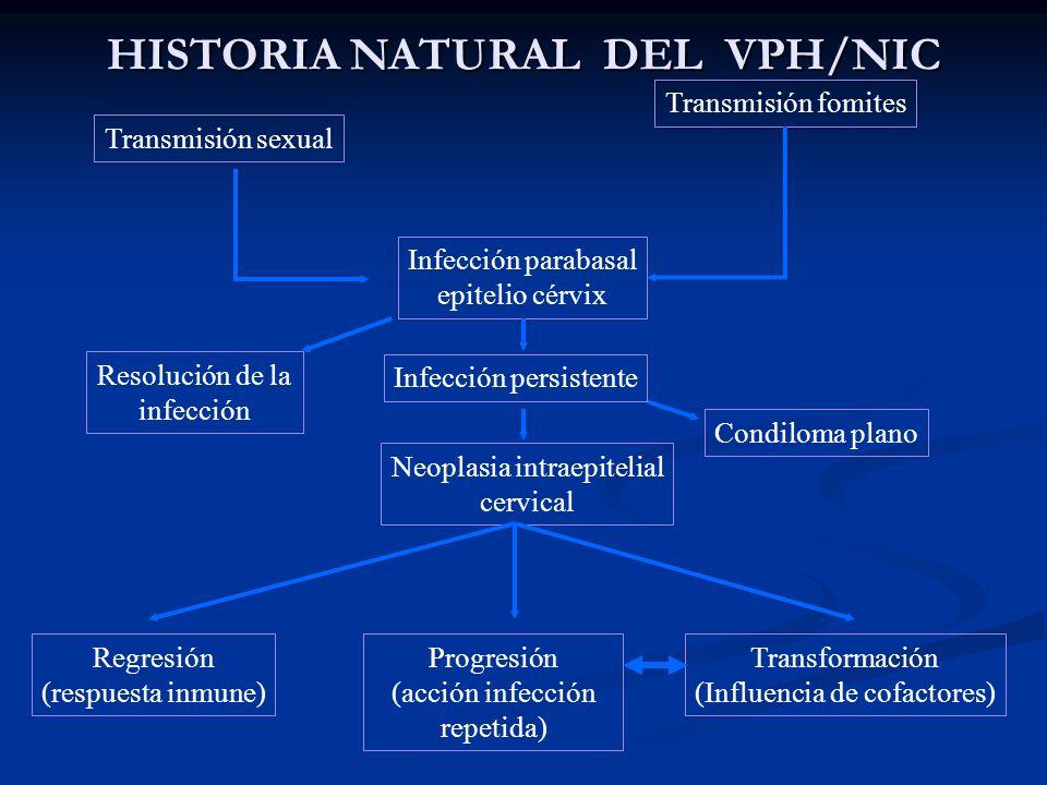 HISTORIA NATURAL DEL VPH/NIC Transmisión sexual Transmisión fomites Infección parabasal epitelio cérvix Condiloma plano Neoplasia intraepitelial cervi