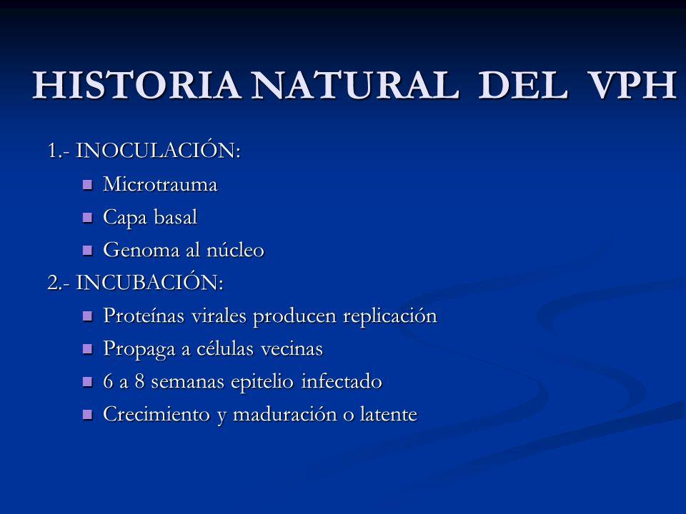 HISTORIA NATURAL DEL VPH 1.- INOCULACIÓN: Microtrauma Microtrauma Capa basal Capa basal Genoma al núcleo Genoma al núcleo 2.- INCUBACIÓN: Proteínas vi