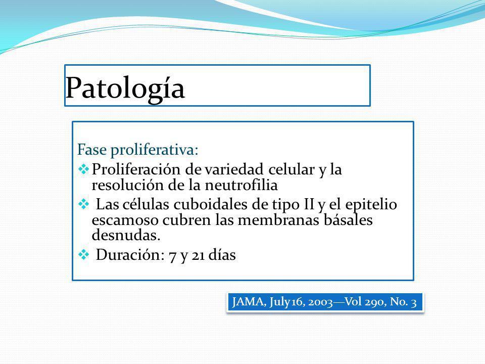 Patología Fase proliferativa: Proliferación de variedad celular y la resolución de la neutrofilia Las células cuboidales de tipo II y el epitelio esca