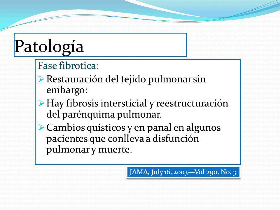 Patología Fase fibrotica: Restauración del tejido pulmonar sin embargo: Hay fibrosis intersticial y reestructuración del parénquima pulmonar. Cambios