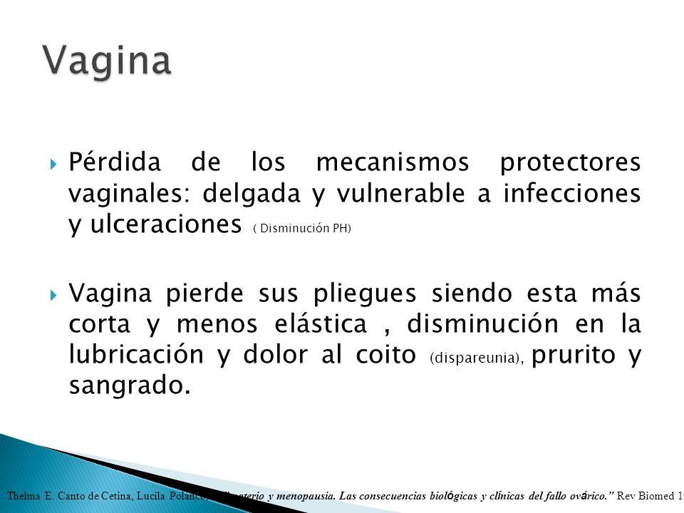Pérdida de los mecanismos protectores vaginales: delgada y vulnerable a infecciones y ulceraciones ( Disminución PH) Vagina pierde sus pliegues siendo