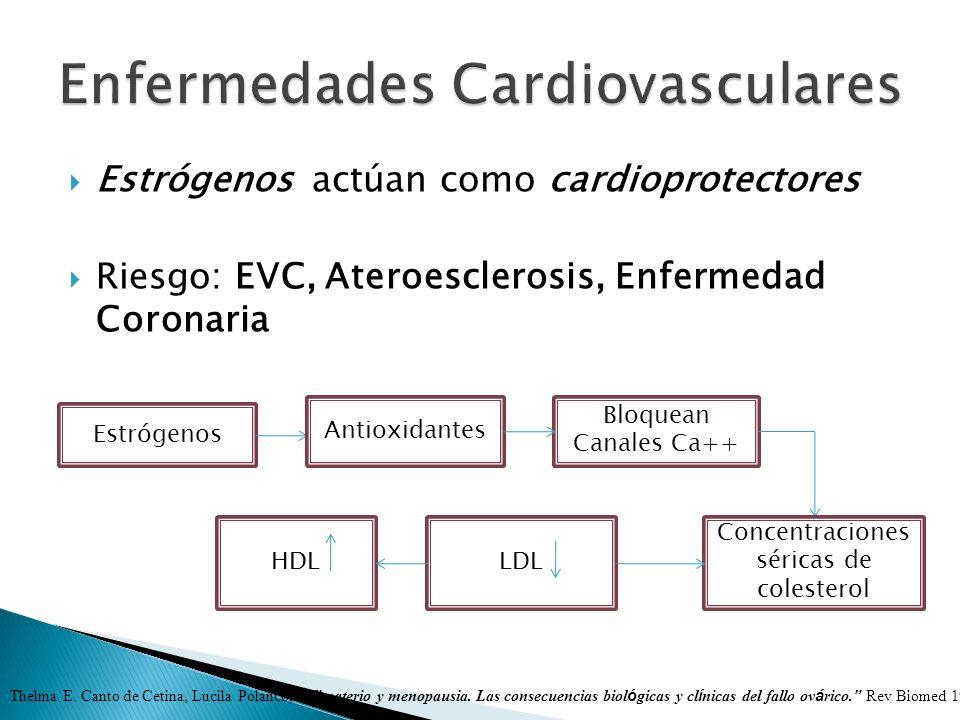 Estrógenos actúan como cardioprotectores Riesgo: EVC, Ateroesclerosis, Enfermedad Coronaria Estrógenos Antioxidantes Bloquean Canales Ca++ Concentraci
