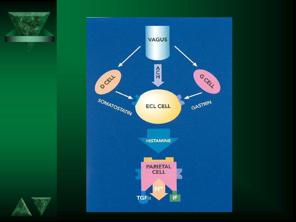 H + K + ATPase