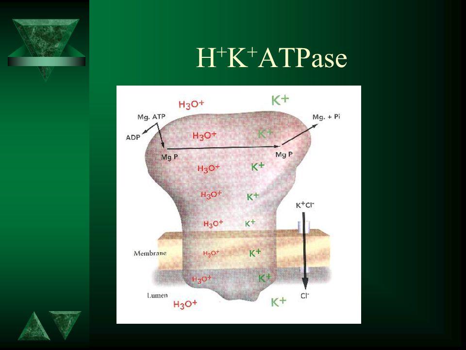 Activación de las bombas de ácido ACh Canaliculos Vesículas Tubulares Bombas Activas