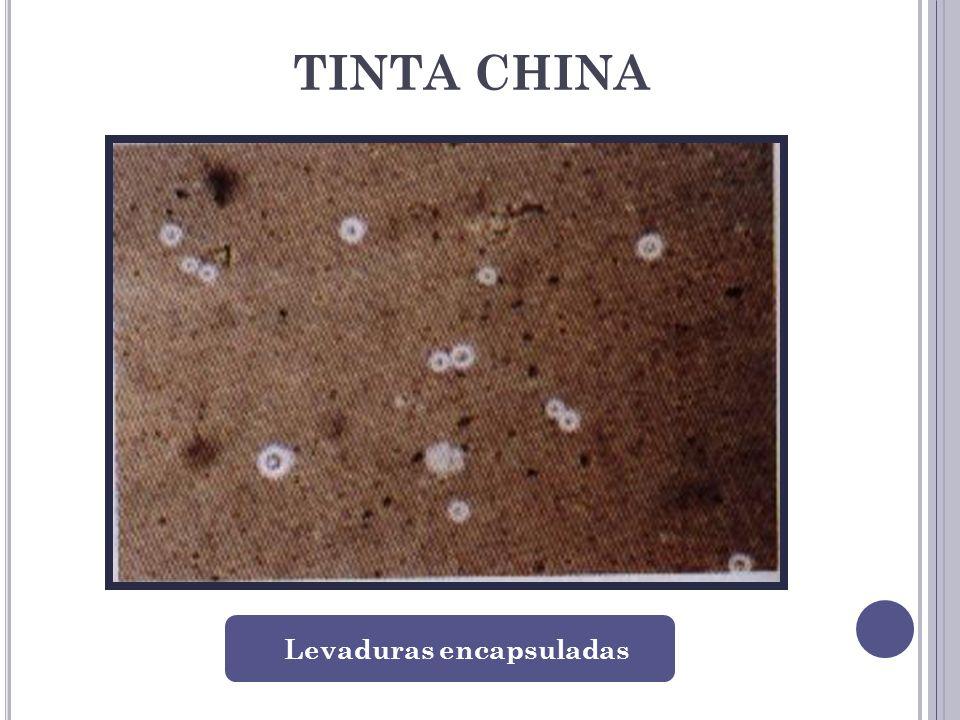 TINTA CHINA Levaduras encapsuladas