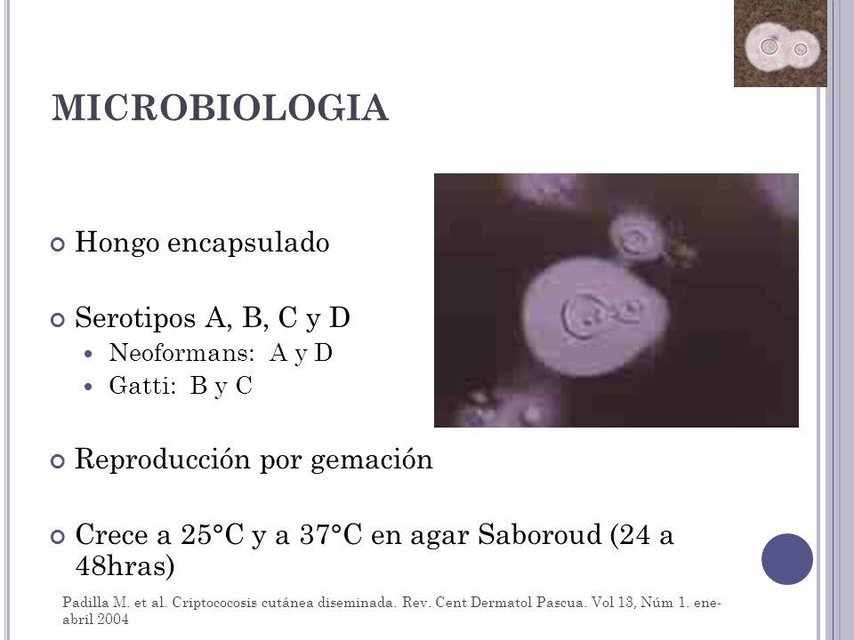 MICROBIOLOGIA Hongo encapsulado Serotipos A, B, C y D Neoformans: A y D Gatti: B y C Reproducción por gemación Crece a 25°C y a 37°C en agar Saboroud