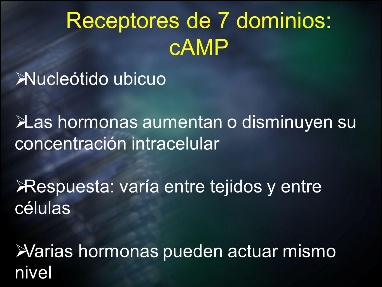 Receptores de 7 dominios: cAMP Nucleótido ubicuo Las hormonas aumentan o disminuyen su concentración intracelular Respuesta: varía entre tejidos y ent