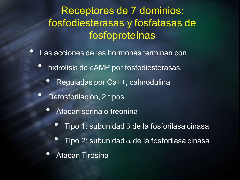 Receptores de 7 dominios: fosfodiesterasas y fosfatasas de fosfoproteínas Las acciones de las hormonas terminan con hidrólisis de cAMP por fosfodieste