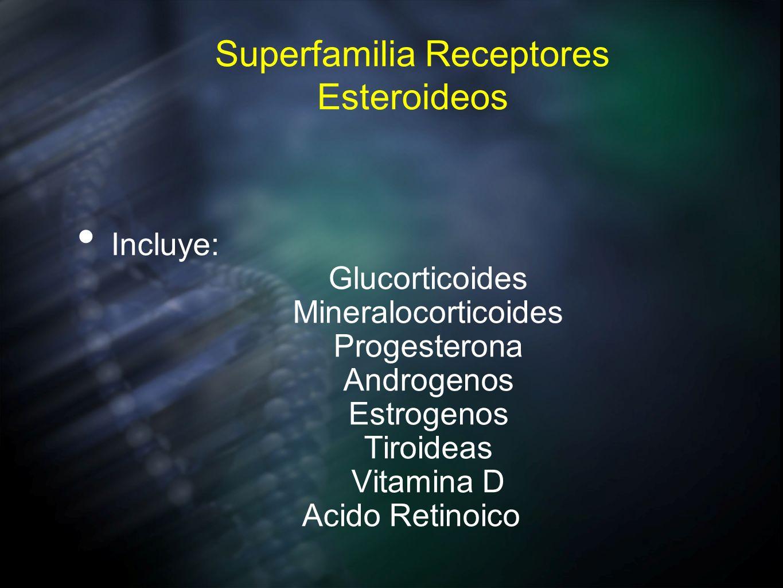 Superfamilia Receptores Esteroideos Incluye: Glucorticoides Mineralocorticoides Progesterona Androgenos Estrogenos Tiroideas Vitamina D Acido Retinoic