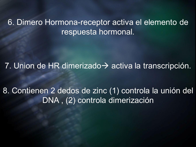 6. Dimero Hormona-receptor activa el elemento de respuesta hormonal. 7. Union de HR dimerizado activa la transcripción. 8. Contienen 2 dedos de zinc (