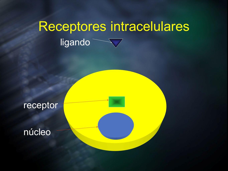 Receptores intracelulares núcleo receptor ligando