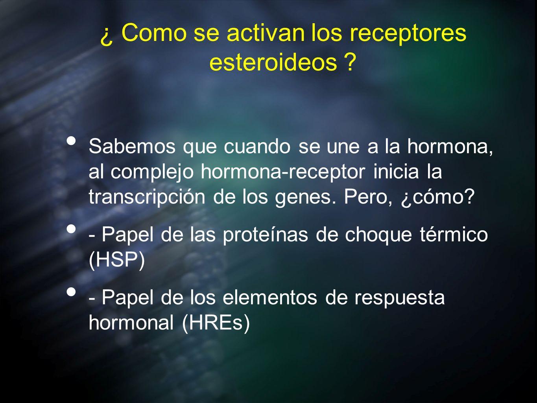 ¿ Como se activan los receptores esteroideos ? Sabemos que cuando se une a la hormona, al complejo hormona-receptor inicia la transcripción de los gen