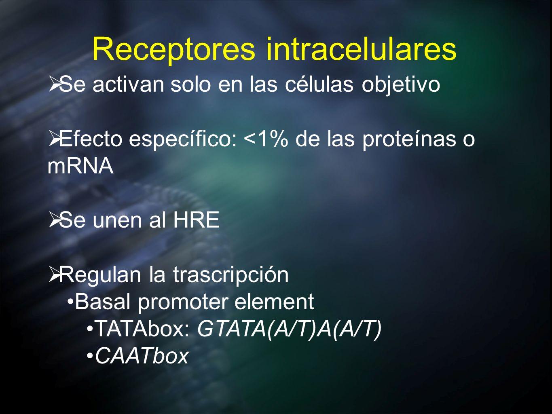 Receptores intracelulares Se activan solo en las células objetivo Efecto específico: <1% de las proteínas o mRNA Se unen al HRE Regulan la trascripció