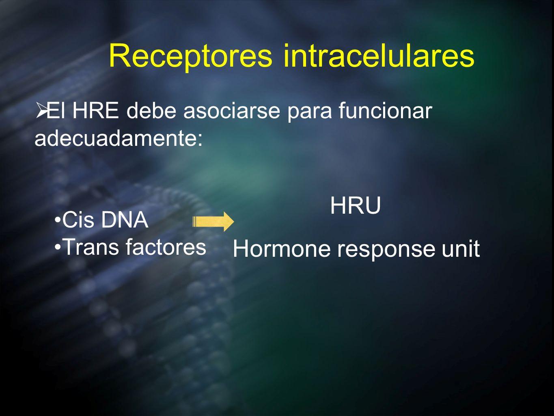 Receptores intracelulares El HRE debe asociarse para funcionar adecuadamente: Cis DNA Trans factores HRU Hormone response unit