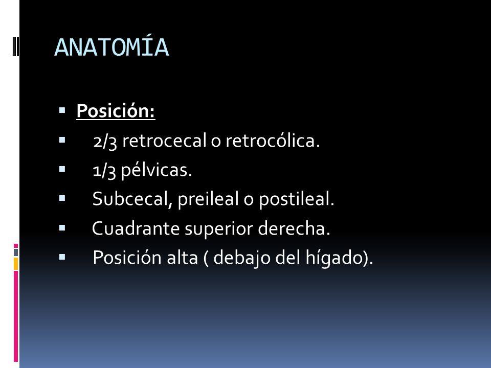 ANATOMÍA Posición: 2/3 retrocecal o retrocólica. 1/3 pélvicas. Subcecal, preileal o postileal. Cuadrante superior derecha. Posición alta ( debajo del