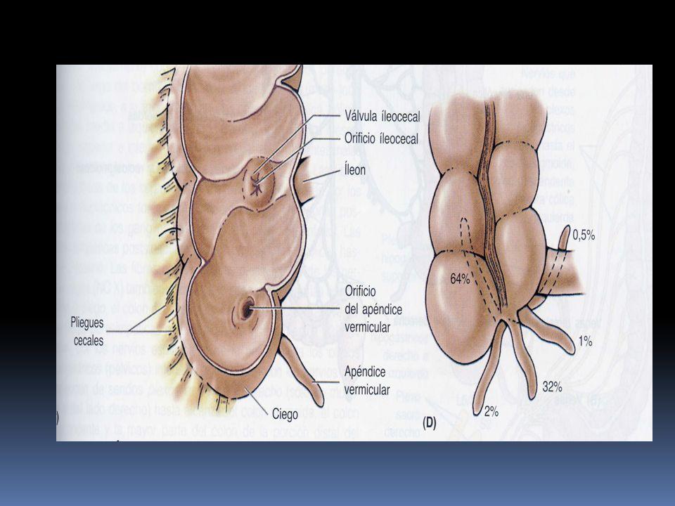 Diagnósticos diferenciales 14.- Trastornos ginecológicos: el 32- 45% de las apendicetomías practicadas en mujeres de 5- 45 años tienen un apéndice normal.