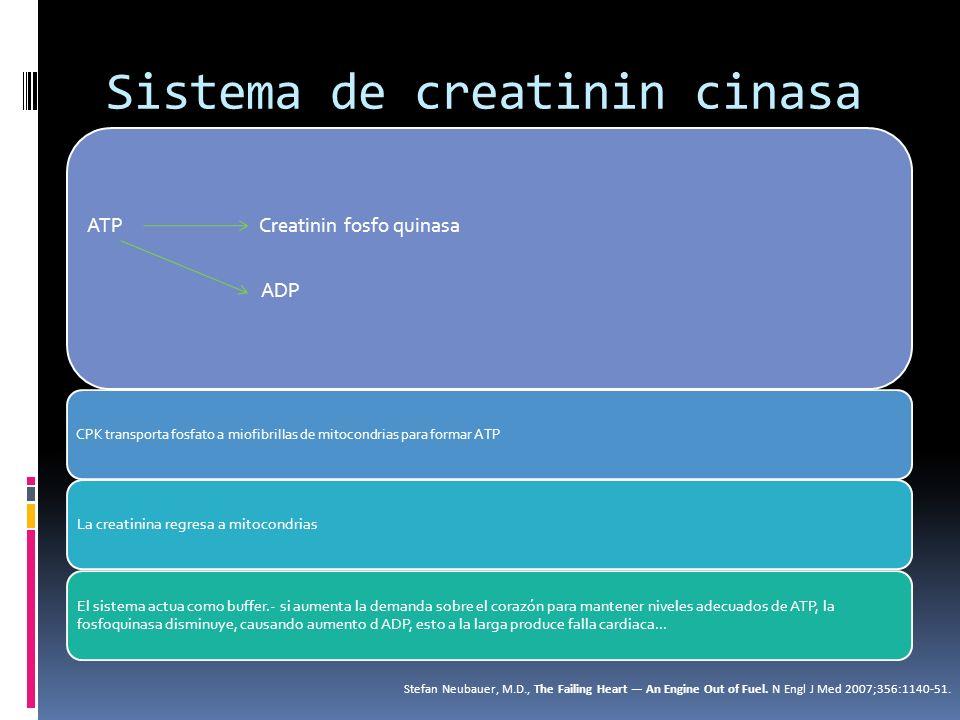 CPK Se produce en el hígado y en el riñón La creatinin cinasa se encarga de 2/3 de la fosforilación de la reserva de creatinina Stefan Neubauer, M.D., The Failing Heart An Engine Out of Fuel.