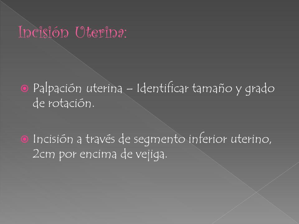 Palpación uterina – Identificar tamaño y grado de rotación. Incisión a través de segmento inferior uterino, 2cm por encima de vejiga.