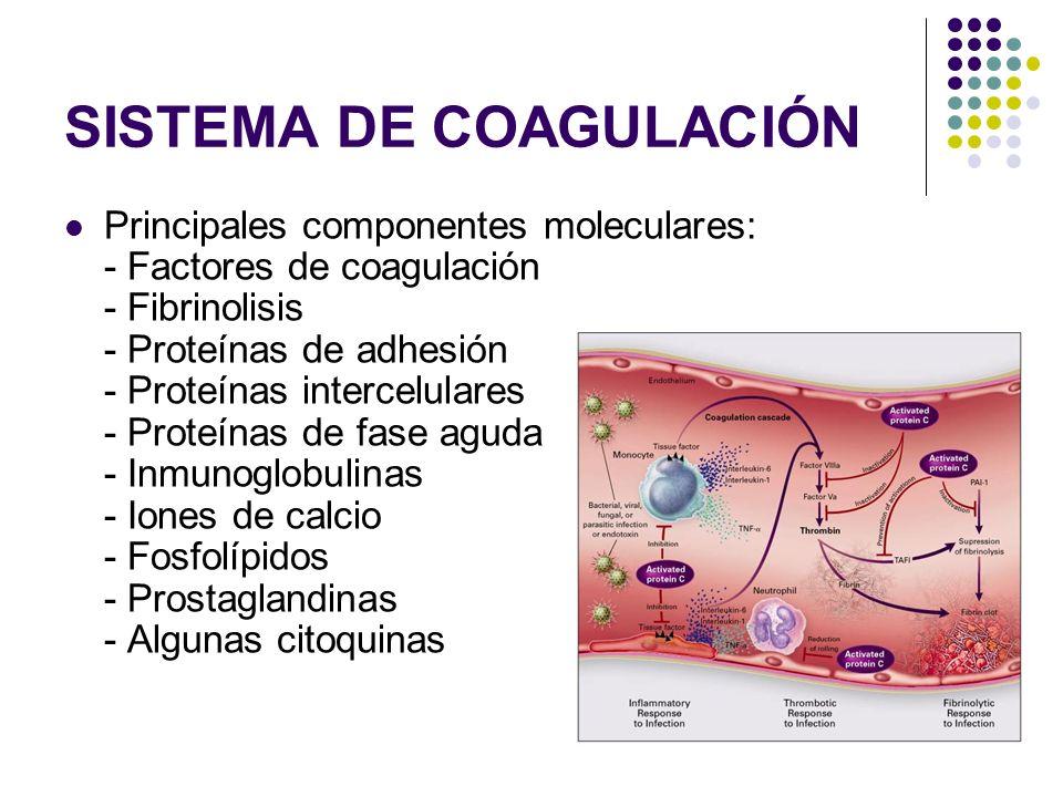 SISTEMA DE COAGULACIÓN Principales componentes moleculares: - Factores de coagulación - Fibrinolisis - Proteínas de adhesión - Proteínas intercelulare