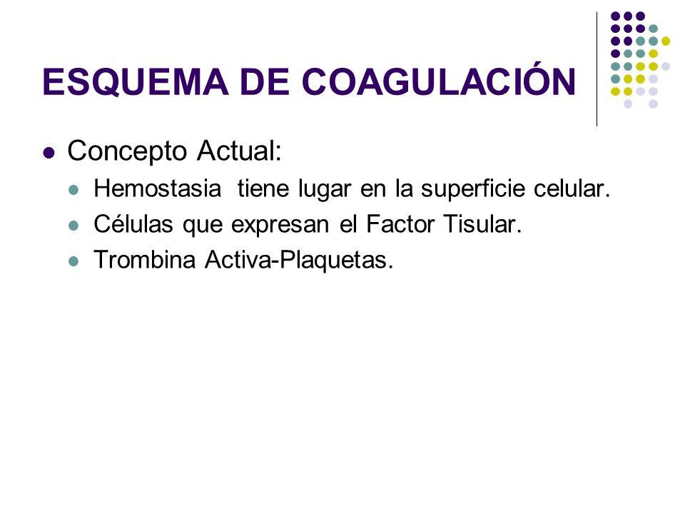 ESQUEMA DE COAGULACIÓN Concepto Actual: Hemostasia tiene lugar en la superficie celular. Células que expresan el Factor Tisular. Trombina Activa-Plaqu