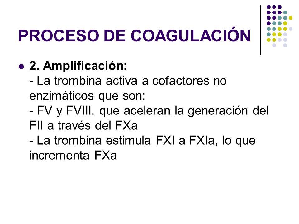 PROCESO DE COAGULACIÓN 2. Amplificación: - La trombina activa a cofactores no enzimáticos que son: - FV y FVIII, que aceleran la generación del FII a