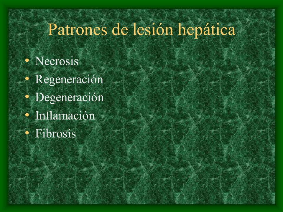 Patrones de lesión hepática Necrosis Regeneración Degeneración Inflamación Fibrosis