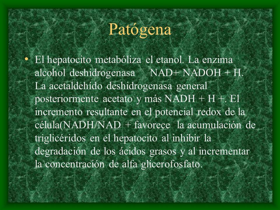 Patógena El hepatocito metabóliza el etanol. La enzima alcohol deshidrogenasa NAD+ NADOH + H. La acetaldehído deshidrogenasa general posteriormente ac