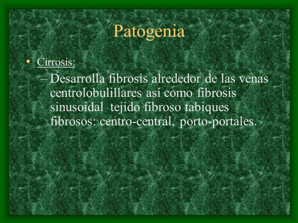 Patogenia Cirrosis: –Desarrolla fibrosis alrededor de las venas centrolobulillares así como fibrosis sinusoidal tejido fibroso tabiques fibrosos: cent