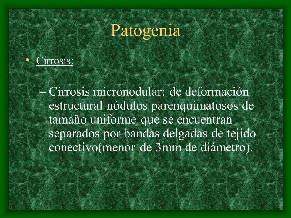Patogenia Cirrosis: –Cirrosis micronodular: de deformación estructural nódulos parenquimatosos de tamaño uniforme que se encuentran separados por band
