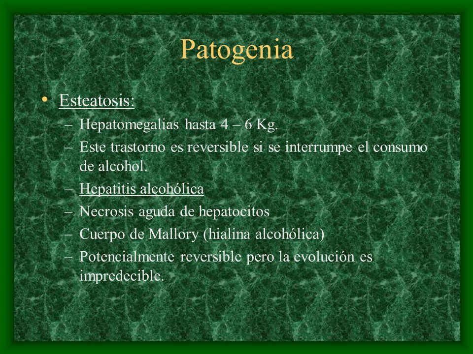 Patogenia Esteatosis: –Hepatomegalias hasta 4 – 6 Kg. –Este trastorno es reversible si se interrumpe el consumo de alcohol. –Hepatitis alcohólica –Nec
