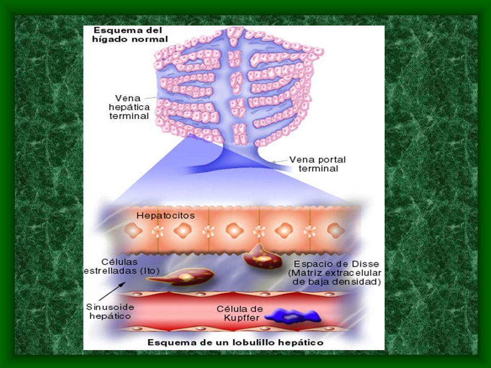 Patogenia El sistema de oxidación microsomal mixto.