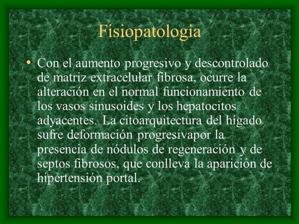 Fisiopatologia Son el colapso de los lobulillos hepáticos, la formación de tabiques fibrosos difusos y la regeneración nodular de los hepatocitos.
