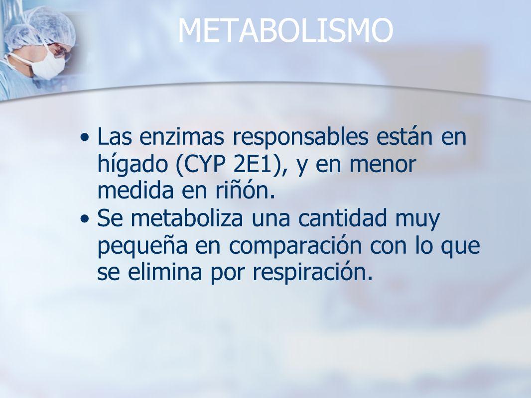 METABOLISMO Las enzimas responsables están en hígado (CYP 2E1), y en menor medida en riñón. Se metaboliza una cantidad muy pequeña en comparación con