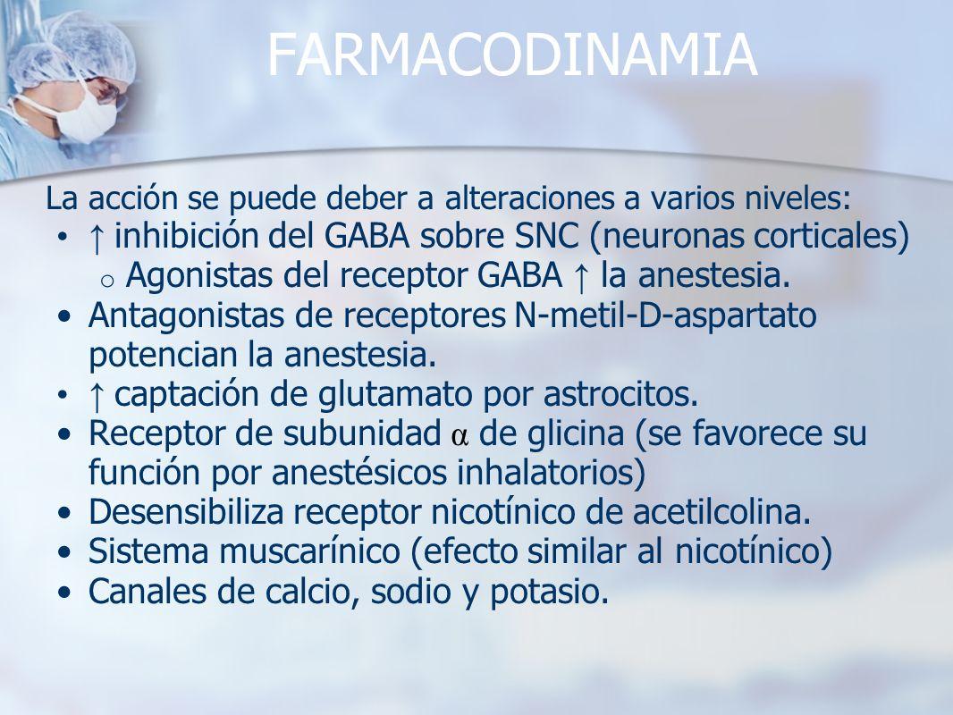 FARMACODINAMIA La acción se puede deber a alteraciones a varios niveles: inhibición del GABA sobre SNC (neuronas corticales) o Agonistas del receptor