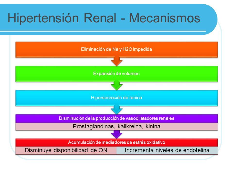 Hipertensión Renal - Mecanismos Acumulación de mediadores de estrés oxidativo Disminuye disponibilidad de ONIncrementa niveles de endotelina Disminución de la producción de vasodilatadores renales Prostaglandinas, kalikreina, kinina Hipersecreción de renina Expansión de volumen Eliminación de Na y H2O impedida
